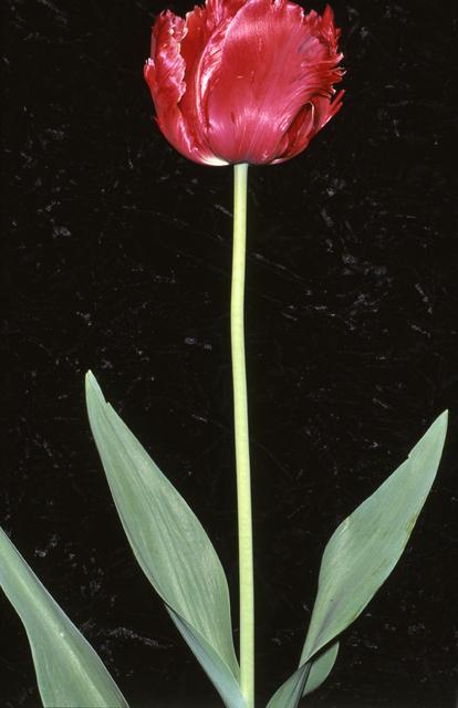 , 'Identité, Melun 23 avril 1991,' 2001, Galerie Christophe Gaillard