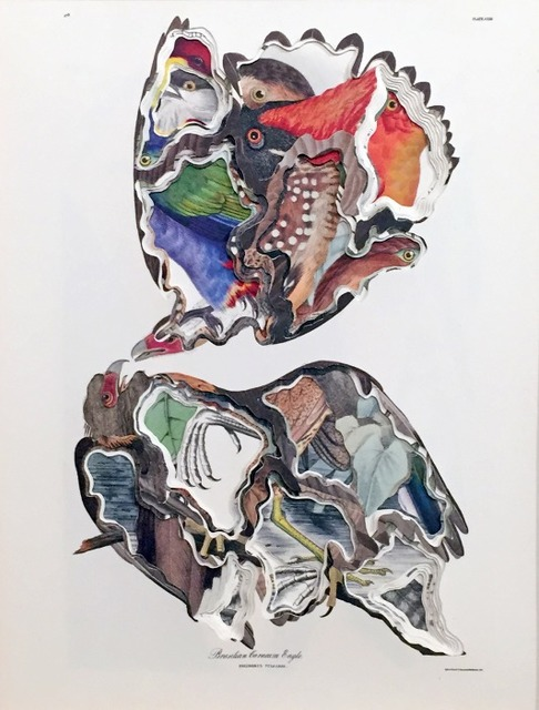 , 'Polyborus Vulgaris,' 2015, Octavia Art Gallery