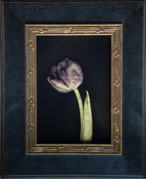 , 'Purple Tulip,' , Catherine Couturier Gallery
