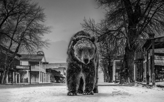 David Yarrow, 'Out Of Towner', 2019, Photography, Archival Pigment Print, Maddox Gallery