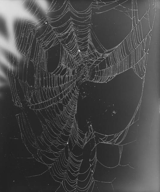 , 'Web Study #22,' 2015, Von Lintel Gallery
