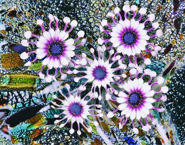 , 'Spinning Cinneraria,' 2011, Jim Kempner Fine Art