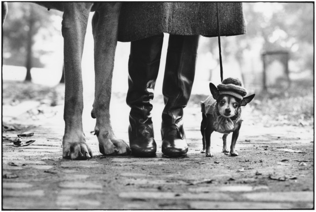 Elliott Erwitt, 'New York City', 1974, Edwynn Houk Gallery