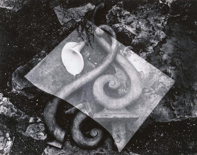 Edward Weston, 'Rubbish Pile - and Lily', 1939, Scott Nichols Gallery