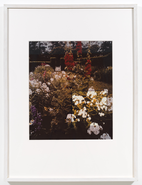 , 'White Phlox (American Gardens #9),' 1990, Downs & Ross