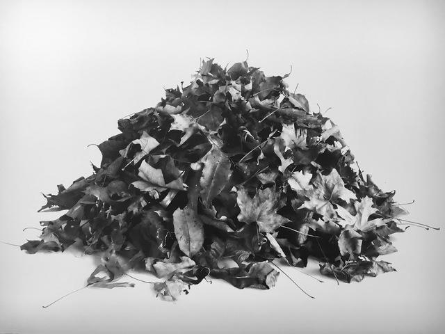 , 'Leaf Pile Study ,' 2016, A.I.R. Gallery