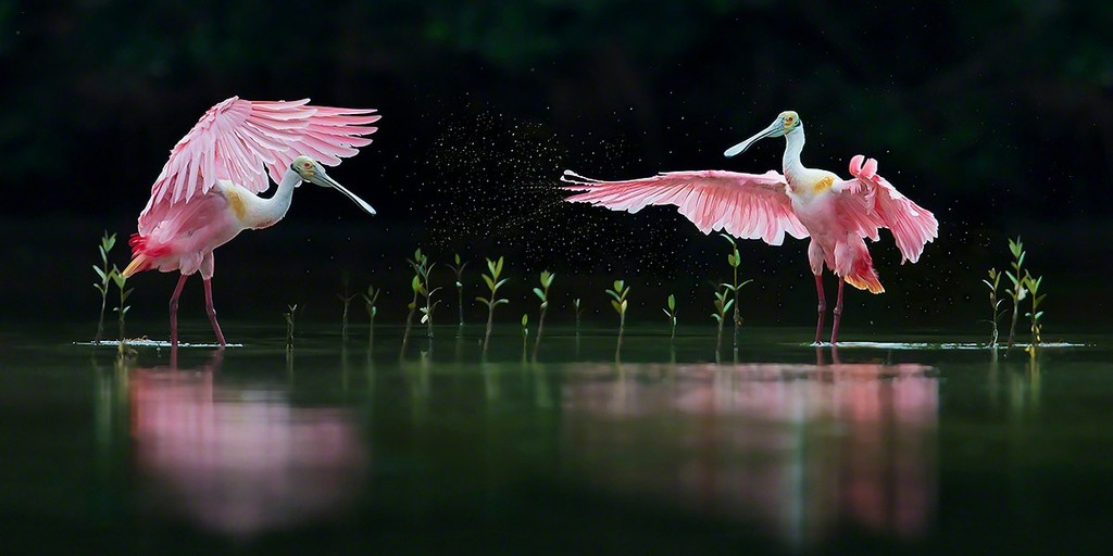 """Pink Symphony"" 