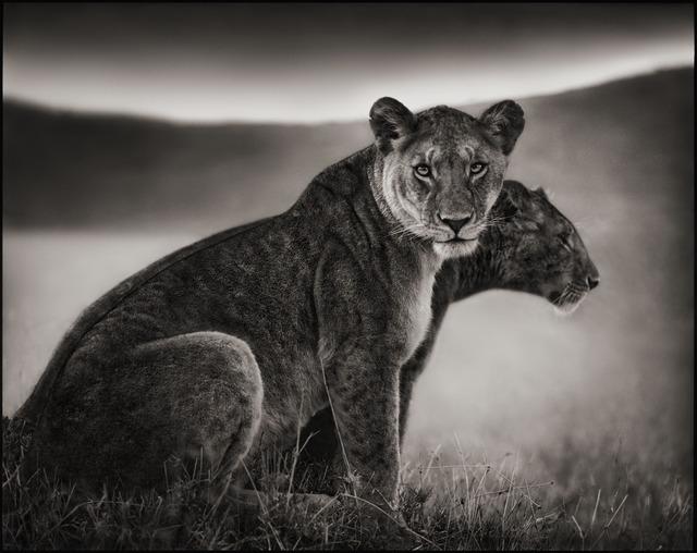 Nick Brandt, 'Sitting Lionesses, Serengeti 2002', 2002, photo-eye Gallery
