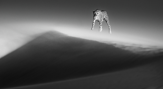 David Yarrow, 'Ethereal Dune', 2013, Photography, Archival Pigment Photograph, Holden Luntz Gallery
