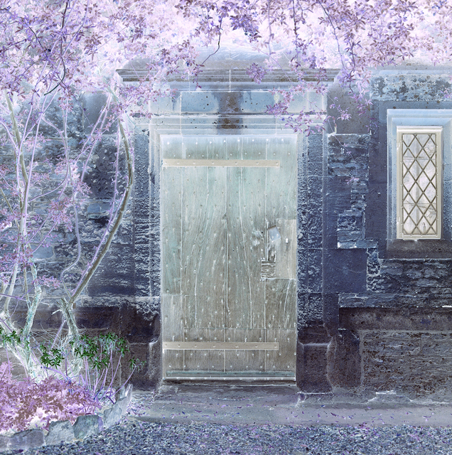 , 'The Open Door, Closed and Inverted,' 2015, Flowers