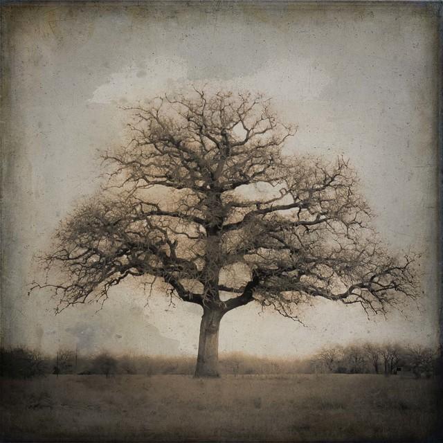, 'Live Oak II, Spring, Plum Creek, Texas,' , Etherton Gallery