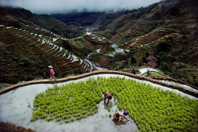 , 'Banaue Rice Terraces,' , Cavalier Galleries