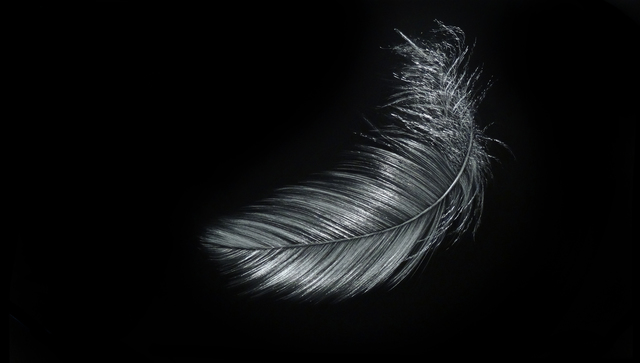 , 'Feather II,' 2015, Callan Contemporary