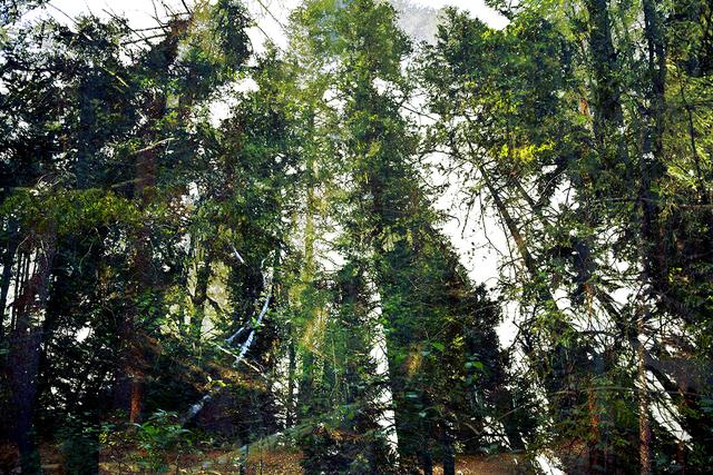 Lincoln Schatz, 'Forest Walk 2', 2013, Hexton Gallery
