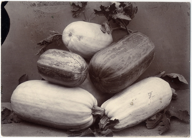 Charles Jones, 'Vegetable Marrows', 1895-1910, Davis & Langdale Company, Inc.
