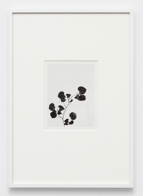 , 'Untitled (Flora),' 2016, David Kordansky Gallery