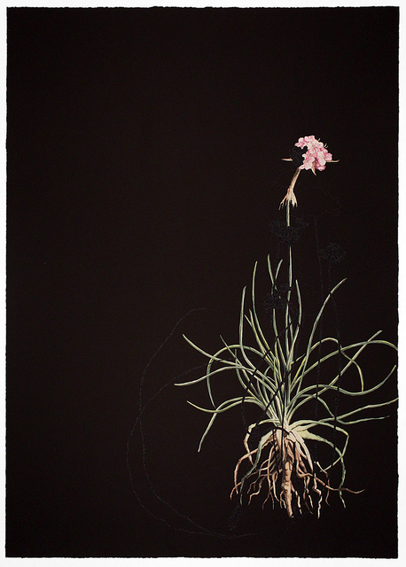Katrina Moorhead, 'Dark Botanical', 2019, Inman Gallery