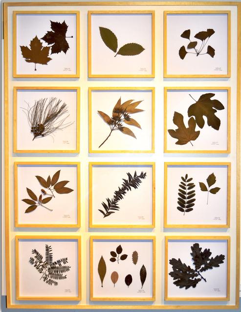 , 'La Naturaleza no se Atrapa, Panel II,' 2018, ACCS Visual Arts
