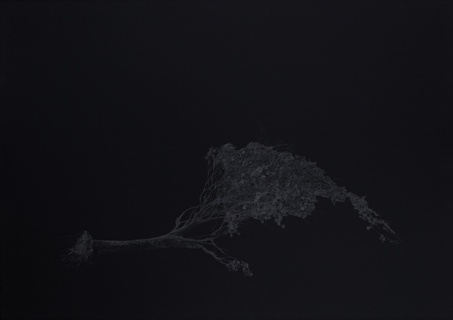 Aleksandar Duravcevic, 'Tree small', 2010, Drawing, Collage or other Work on Paper, Graphite on black paper, espacio artkunstarte