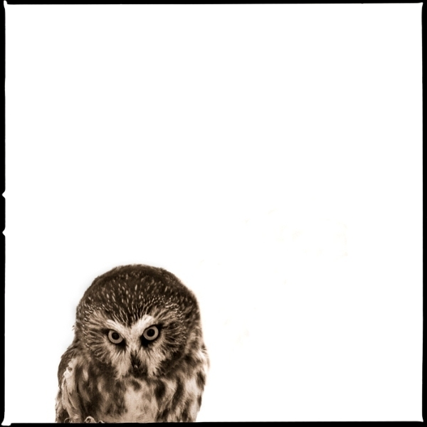 , 'Owl IV,' 2017, Julie Nester Gallery