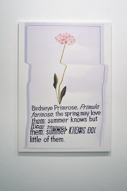 , 'Birdseye Primrose,' 2015, UNION Gallery