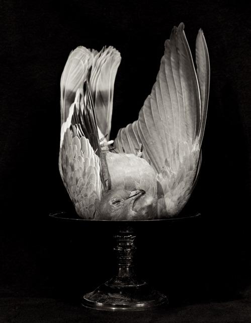 Zoë Zimmerman, 'Peace', 2004, photo-eye Gallery