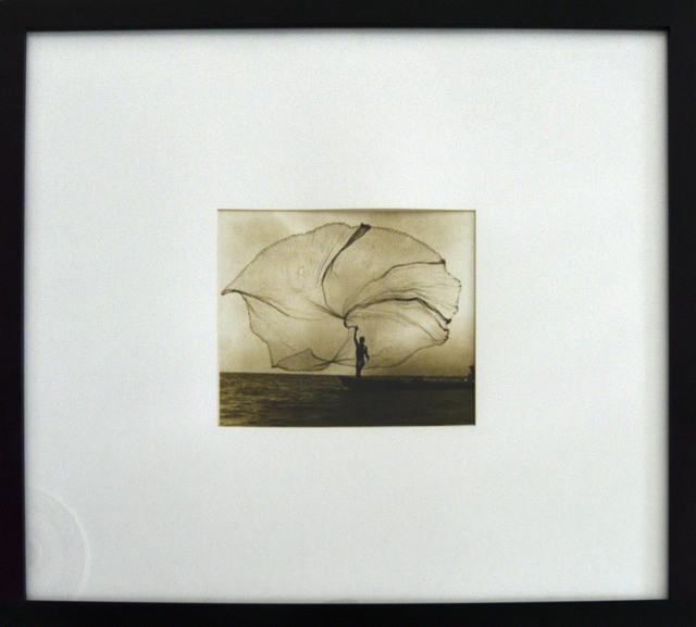 , 'Pavo real del mar, Ciénaga Grande, Colombia,' 1939, The Art:Design Project