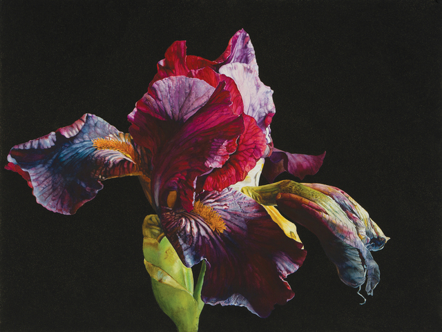 , 'Love's fire,' , Jonathan Cooper