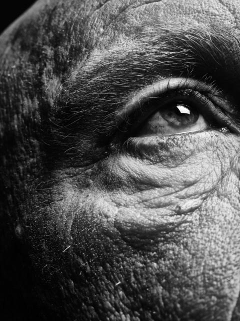 Bill Brandt Eyes