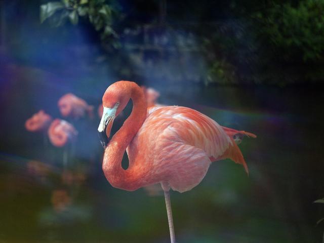 , 'Flamingo,' 2014, Neon Parc