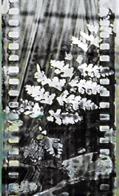 Donna Cameron, 'Fossil Fern', Chicago Art Source