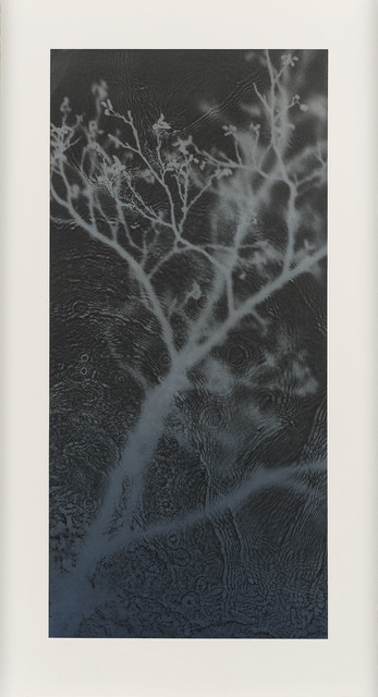 , 'Willow   ,' 2018, Purdy Hicks Gallery