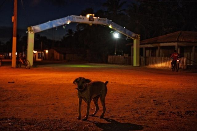 , 'Cão errante no Jubim,' 2012, Galeria Leme