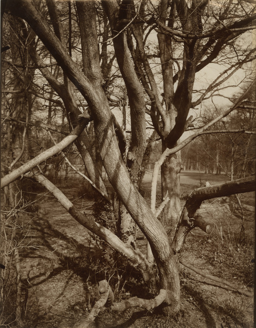 , 'Arbre, St. Cloud,' 1922, Lee Gallery