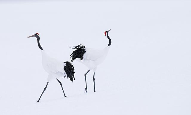 David Yarrow, 'Hokkaido', 2017, Isabella Garrucho Fine Art
