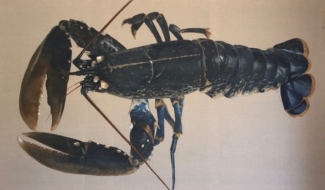 """Michel Brosseau, '""""Blue Catch"""" Large scale oil Painting of Blue Lobster on Exposed Linen', 2017, Eisenhauer Gallery"""
