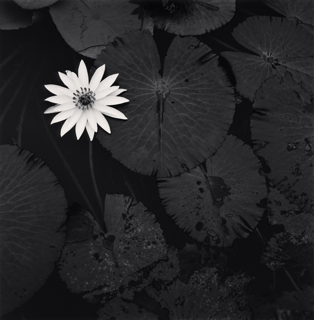 , 'Mamta's Lotus Flower, Ban Viengkeo, Luang Prabang, Laos,' 2015, A Gallery for Fine Photography