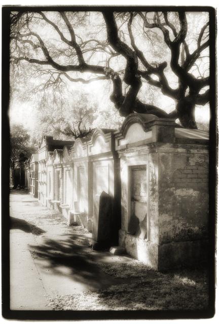 , 'Lafayette I, Tombs with Oak,' , Paraphé