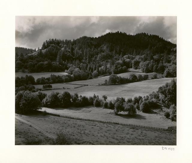 Edward Weston, 'Eel River', 1937-printed 1950 by Brett Weston, Scott Nichols Gallery