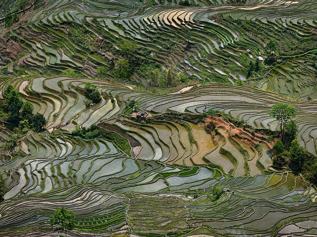, 'Rice Terraces #4, Western Yunnan Province, China,' 2013, Flowers