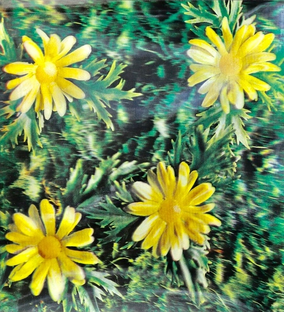 Andy Warhol, 'Untitled (Osaka daisies)', 1970, Print, Xograph, JF Fine Arts & Verosa