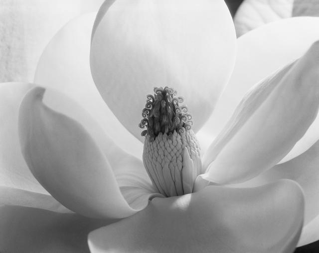 , 'Magnolia Blossom,' 1925, Gallery 270