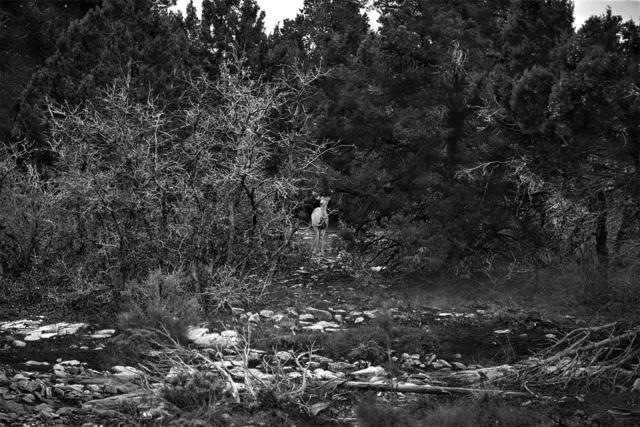 , 'Untitled (Deer),' 2017, Kopeikin Gallery