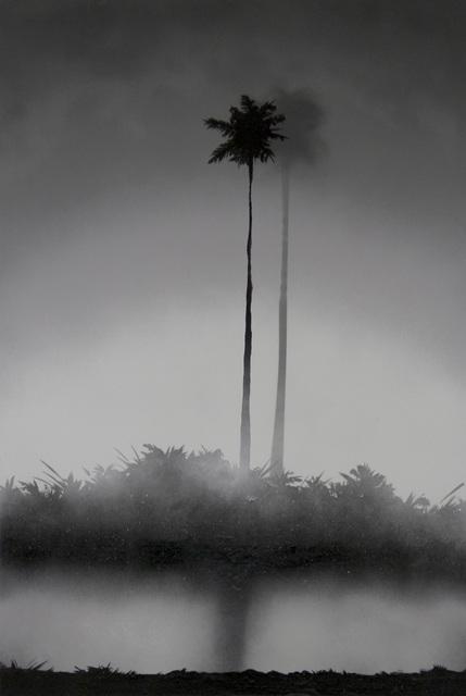 , 'Palm Tree,' 2015, Galerie Rianne Groen