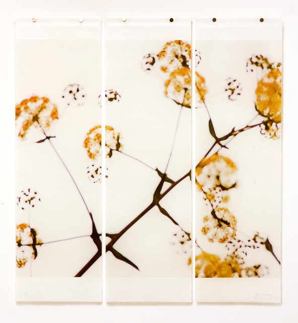 , 'Wild Fennel, No.1 (triptych),' 2018, Carrie Haddad Gallery