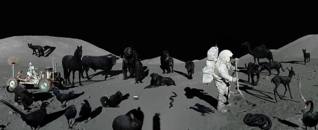 , 'Apollo Melanist Programme,' 2018, SARIEV Contemporary