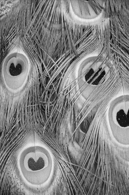 , 'Untitled/ Que muera conmigo el misterio que está escrito en los tigres,' , Alarcón Criado
