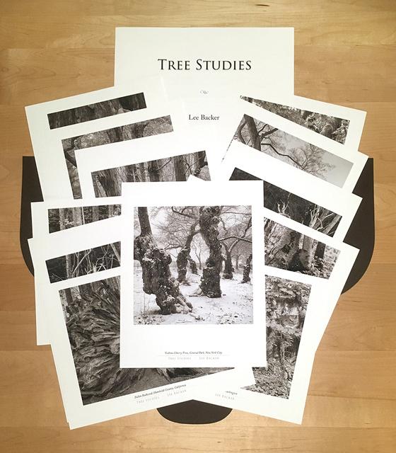 , 'Tree Studies Folio,' , Soho Photo Gallery
