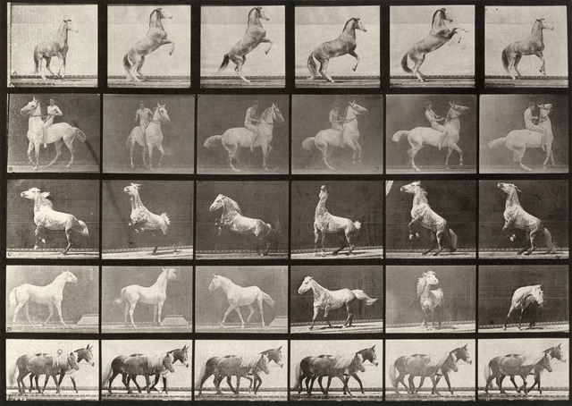 , 'Plate 162 A, B, C, D, E horses rearing, etc.,' 1887, Laurence Miller Gallery