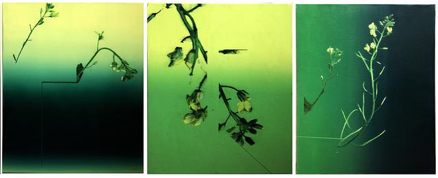 , 'Colza,' 2017, Art Mûr
